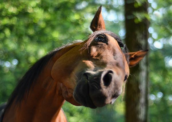 Diritto Equestre